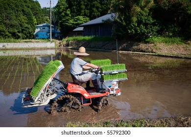 KAGOSHIMA, JAPAN - JUNE 5: A Japanese rice farmer rides a tractor to plant a  flooded rice field with new rice shoots June 5, 2010, in Kagoshima, Japan.