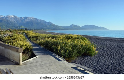 Kaikoura Boardwalk, Mountains, beach and Spring Lupins Panorama early in the morning.