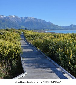 Kaikoura Boardwalk, Mountains and Spring Lupins early in the morning