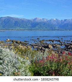 Kaikoura Coast, rock pools, Mountains and Spring Flowers eraly in the morning