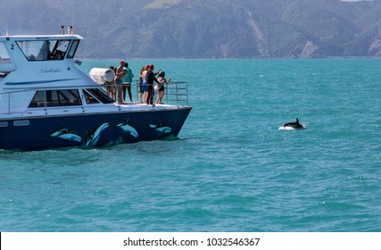 KAIKOURA, NEW ZEALAND - NOVEMBER 21, 2017: A group of people on a tour boat watch and photograph a Dusky dolphin (Lagenorhynchus obscurus) as it jumps out of the water near
