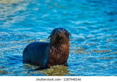 Kaikoura Seal Pups