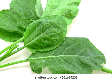 Kai-Lan, Chinese Broccoli, Chinese Kale in isolated white background