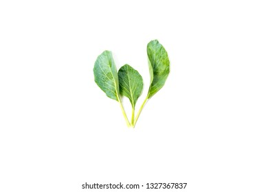 Kai-Lan , Chinese Broccoli , Chinese Kale with root  isolated on white background