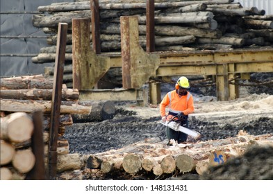 KAITAIA,NZ - JULY 30:Logging worker with chainsaw cut wood logs on July 30 2013. It's New Zealand third largest export earner with international sales in excess of $4 billion.