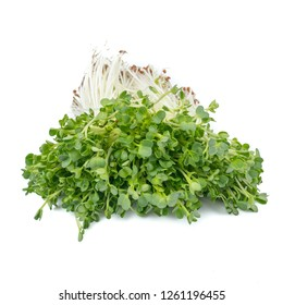 kaiware Daikon Sprouts, radish sprout (Daikon Radish Sprouts) or watercress isolated on white background.concept japanese vegetable for herb