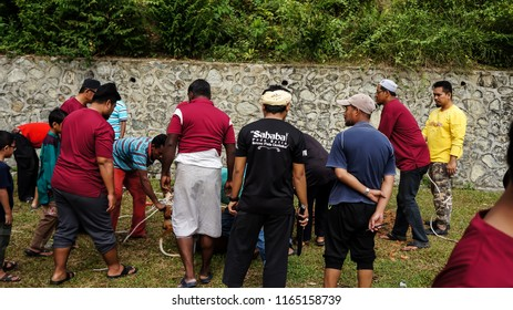 KAJANG,MALAYSIA-AUGUST 22,2018:Unidentified Malaysian Muslims help each other preparing in halal slaughtering of cows during Eid Al-Adha Al Mubarak, the Feast of Sacrifice or Qurban