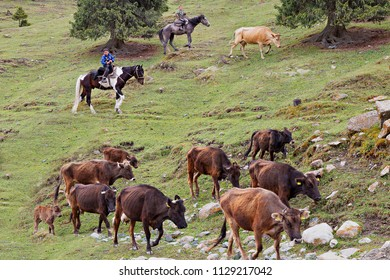 KAJI SAY, KYRGYZSTAN - JUNE 4, 2018: Young shepherds on their horse herd the cows, in Kaji Say, Kyrgyzstan.