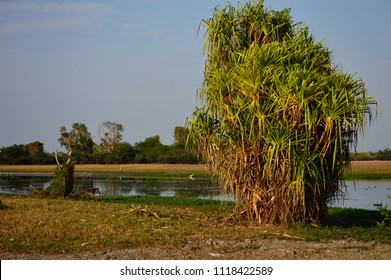 Kakadu National Park,Northern Territory, Australia: Yellow Water Billabong landscape in early morning light