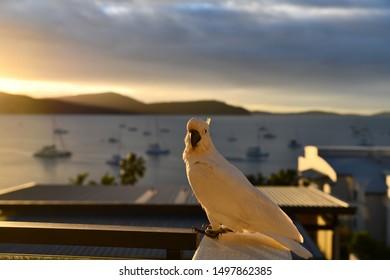 Kakadu sitting on the balcony