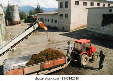 Kakheti Region, Georgia, September 2009: Men work at a wine factory taking care of the left overs from the grape crashing during harvest in Kakheti Region, Georgia.