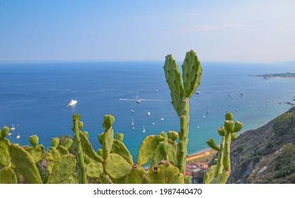 Kakteen auf Sicilien mit dem Mittelmeer im Hintergrund - Shutterstock ID 1987440470