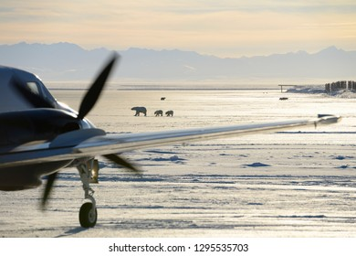 Kaktovik, Alaska, United States - October 15, 2013: Taxiing airplane on Barter Island LRRS airport Kaktovik Alaska with polar bear sows and cubs and mountains