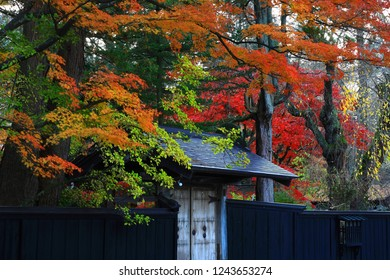 Kakunodate in Akita Prefecture, autumn leaves