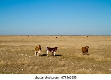 kalahari desert in botswana, africa
