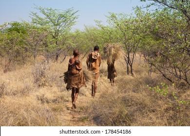 Kalahari Desert, Botswana-October 16, 2011. Family of Bushmen go home after gathered straws for house roof repair on October 16, 2011 at Kalahari desert in Botswana.