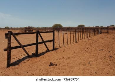 Kalahari, Ghanzi, Botswana,Bushland, Kalahari desert