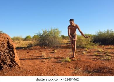 KALAHARI, NAMIBIA - JAN 24, 2016: Bushman hunter hunting in Kalahari desert. The San people, also known as Bushmen are members of various indigenous hunter-gatherer peoples of Southern Africa