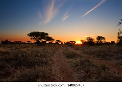 Kalahari sunset with trees grass and blue sky and road
