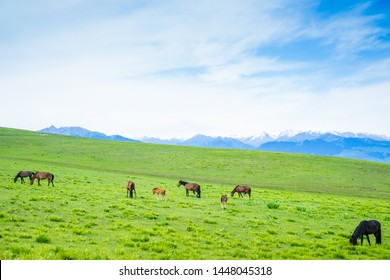 Kalajun grassland in Xinjiang ,Horse farm are in the grassland