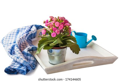 Kalanchoe with pink flowers on a white tray next to the towel and watering