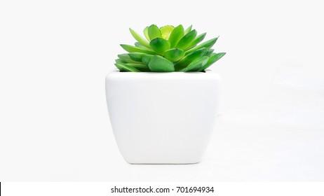 Kalanchoe in white vase.