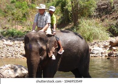 KALAW, BURMA - FEB 27, 2015 - Tourist rides an elephant in the  Elephant conservation camp near Kalaw Myanmar (Burma)