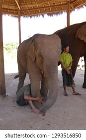 KALAW, BURMA - FEB 27, 2015 - TElephants in a  retirment camp for former working animals (Elephas maximus indicus),  Elephant conservation camp near Kalaw Myanmar (Burma)