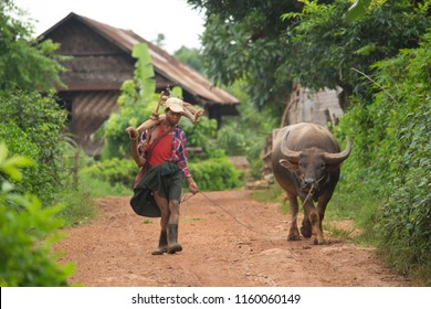 Kalaw, Myanmar - August 18 2015 : Farmer in the field between Kalaw and Inle lake, Burma