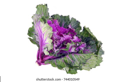 kale cabbage button hole isolated on white