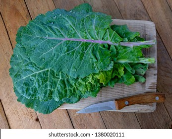 Kale cabbage leaf bunch. Tuscan or black kale on wood table. Winter cabbage leaf (italian kale or lacinato) cut for salad & soup. Organic cabbage leaf food. Ingredient in italian, turkish cuisine