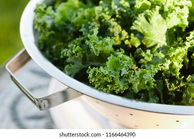 Kale, just washed and draining in a colander. Setting in natural outdoor light.