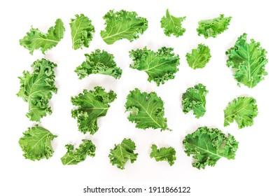 Kale Blätter Gemüse einzeln auf weißem Hintergrund. Kale gilt als Supernahrung, weil es eine großartige Quelle von Vitaminen und Mineralien ist. Draufsicht.