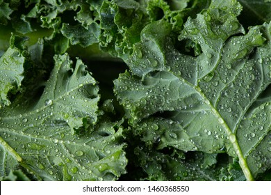 kale salad leaves close up with water drops background