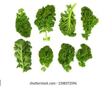 kale vegetable leaf