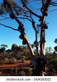 Kalgoorlie natural bush settings. Striking outback Australia.