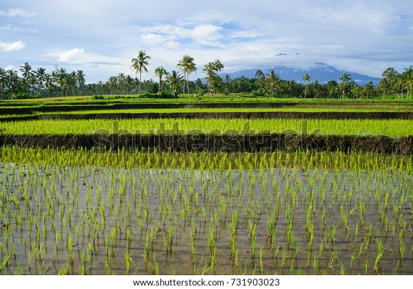 Kalibaru in Indonesia. Hill town with rice paddies
