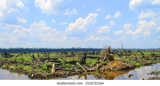 Kalimantan/Borneo deforestation by burning the jungle