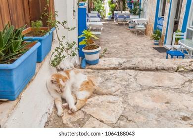 Kalkan, Kas, Turkey - August 13, 2017: A street homeless cat on the street in the old town of Kalkan