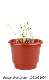 Kalonji (Black cumin) sprouts in brown plastic pot isolated on white background