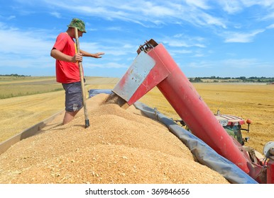Kalush, Ukraine - July 17: Overloading grain silo with a tractor in a car in the field near the town Kalush, Western Ukraine July 17, 2015
