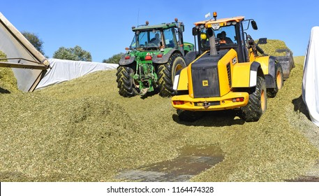 Kalush, Ukraine September 14, 2017: Ramming of corn silage in the silo trench on a dairy farm near the town of Kalush, Western Ukraine.