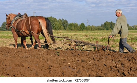 Kalush, Ukraine - September 29, 2017: Fallowing of a field by a manual plow on horse-drawn  near the town Kalush, Western Ukraine.