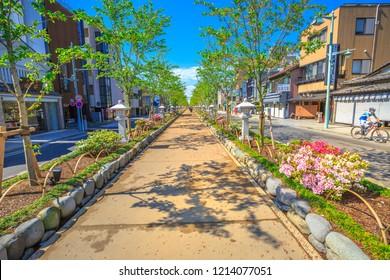 Kamakura, Japan - April 23, 2017: Dankazura way on Wakamiya-Oji Avenue with cherry trees from the Tsurugaoka Hachiman shinto sanctuary to the beach of Kamakura in Japan.
