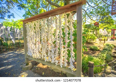 Kamakura, Japan - April 23, 2017: a lot of Omikuji tied to ropes at Tsurugaoka Hachiman. O-mikuji are random fortunes written on strips of paper at Shinto shrines and Buddhist temples in Japan