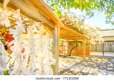 Kamakura, Japan - April 23, 2017: a lot of Omikuji, Japanese random fortunes written on strips of paper, tied to ropes at Hata-age Benzaiten Shrine inside Tsurugaoka Hachimangu complex in Kamakura.