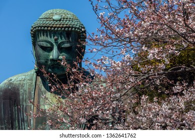 Kamakura,japan-April 04,2019:The Great Amida Buddha With cherry blossom  in Kamakura.The location is Kotokuin temple in Kanagawa Prefecture, Japan.