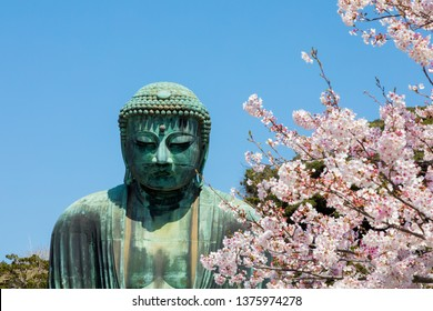 Kamakura,japan-March 31,2018:The Great Amida Buddha With cherry blossom  in Kamakura.The location is Kotokuin temple in Kanagawa Prefecture, Japan.
