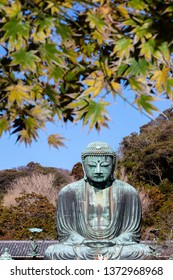 Kamakura,japan-November 30,2018: Great Amida Buddha With Autumn Leaves  in Kamakura.The location is Kotokuin temple in Kanagawa Prefecture, Japan.