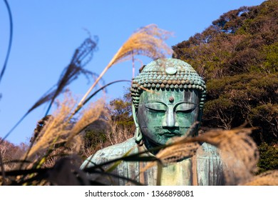 Kamakura,japan-November 30,2018:The Great Amida Buddha With Autumn Leaves  in Kamakura.The location is Kotokuin temple in Kanagawa Prefecture, Japan.